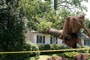 Avoid Home and Property Damage from Falling Trees