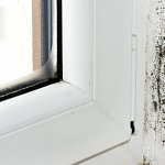Is There a Difference Between Mold and Mildew?