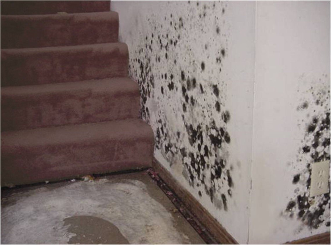 Mold on Wall and in Carpet
